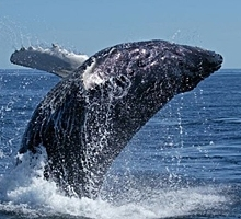 Provincetown Whale Watch